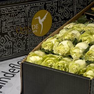 luxury roses box pack
