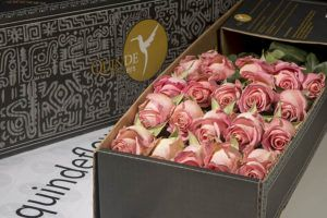 luxury pink roses box pack