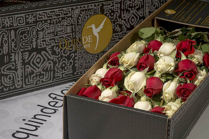 luxury xmas roses box pack christmas