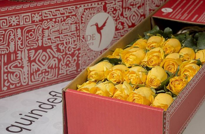 luxury yellow roses box pack