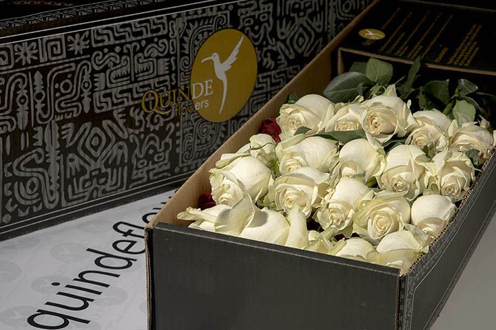 WHITE QUEEN ROSES