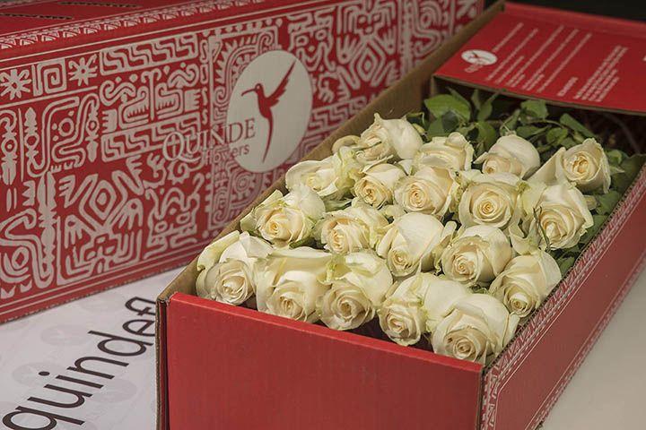 luxury white roses box pack