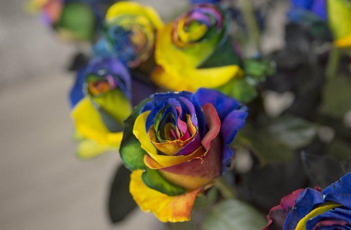 luxury rainbow roses box pack